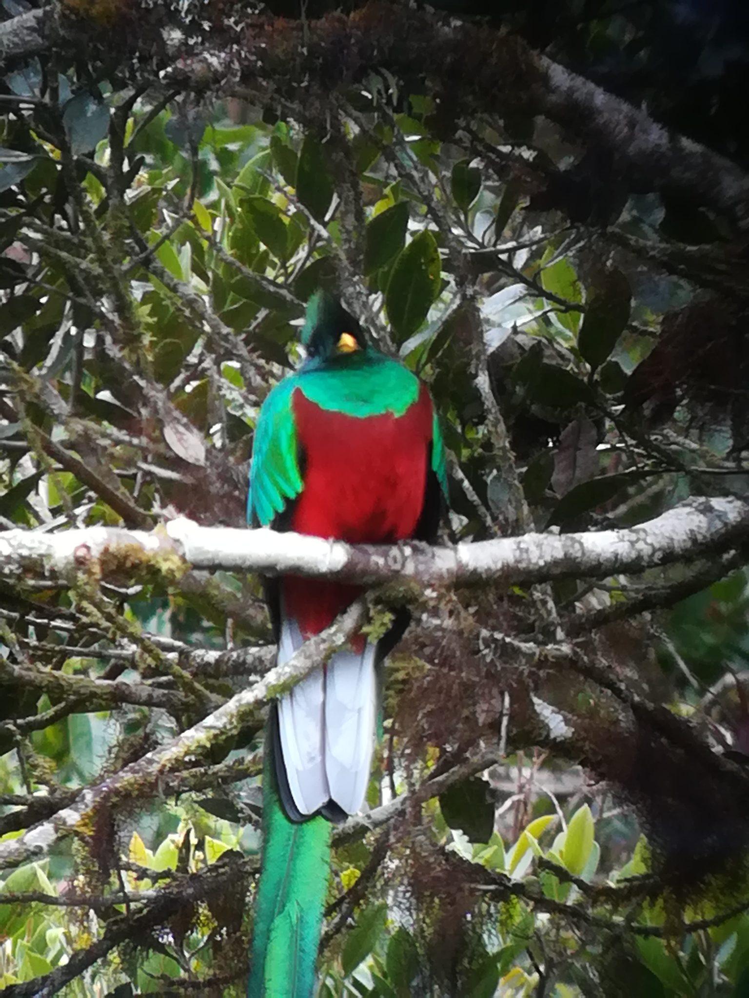 コスタリカ観光|幸せを呼ぶ鳥ケツァール